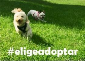 #Adopta